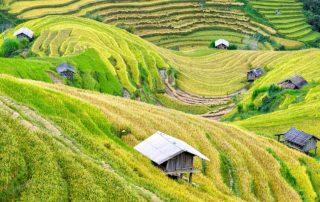 agriculture-mbaandrews